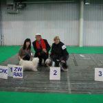 III Karnawałowa Wystawa Psów Rasowych, Gdynia 2013. Akisi ,, Duch Kilimandżaro'', Zwycięzca Rasy,CWC, lok. I