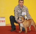 Paran Kameron Bulldogs   podwójny sukces  wystawa dzienna , wystawa nocna i mamy championa :-)