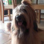 najpiekniejszy psi uśmiech
