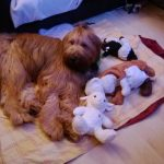 zimowe, leniwe popołudnie...a zabawki moje, wszystkie moje